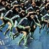 La rebelión de los simios - 7 - elfinalde