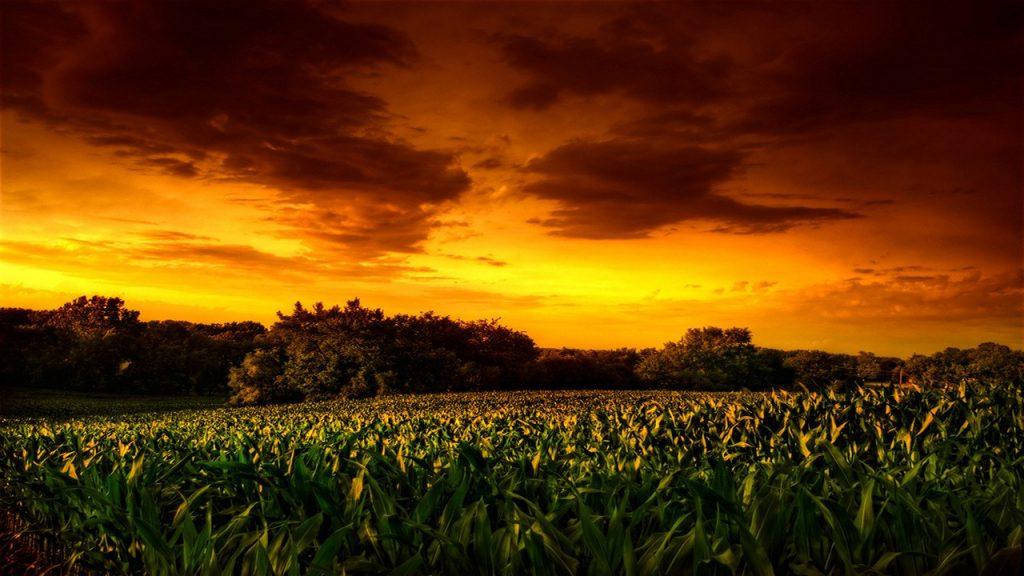 Los chicos del maíz II: El sacrificio final
