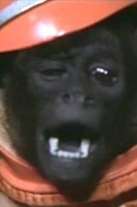 The Woolley Monkey